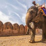 Essay on Elephant in English for School Kids & Students