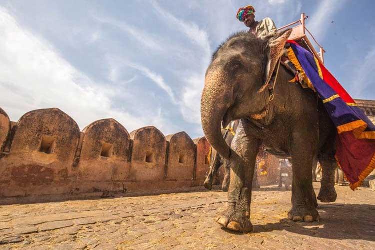 essay on elephant in english