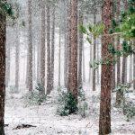 Winter Season Essay in English for School Kids & Children