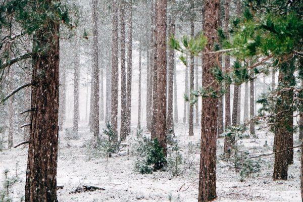 winter season essay