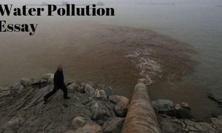 Water Pollution Essay