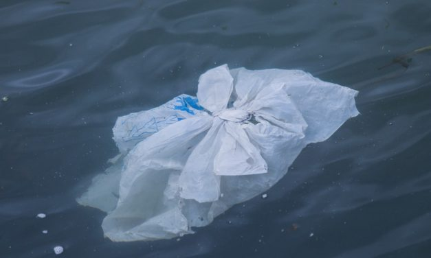 Essay on Plastic Bags in English for School Kids & Students