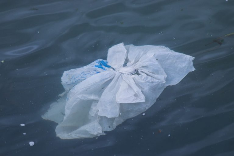 plastic bag floating on water